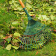 Foto Stock: Leaves rake