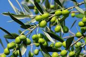 Olive — Stock Photo