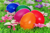 Easter eggs on flower meadow — Stock Photo