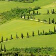 Stock Photo: Cypress curve