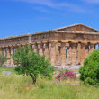 Paestum — Stock Photo #27443379