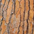 Pine bark — Stock Photo #27443407