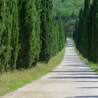 Stock Photo: Cypress avenue