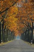 Avenue in fall — Stock Photo