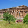 Stock Photo: Paestum