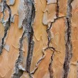 Pine bark — Stock Photo #29526265