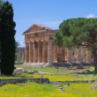 Paestum — Stock Photo #29799965