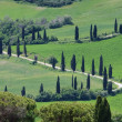 Cypress curve — Stockfoto #29800477