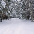 Wald im Winter - forest in winter 42 — Stock Photo