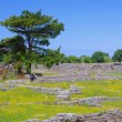 Paestum excavations — ストック写真