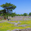 Paestum excavations — Stockfoto