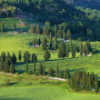 Cypress curve — Stockfoto #30186083