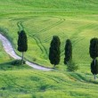 Tuscany cypress trees with track — Stock Photo