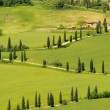 Cypress curve — Stockfoto #30945869