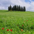 Tuscany forest — Stock Photo