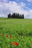 Toscana skog — Stockfoto