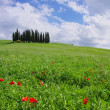 Tuscany forest  — Foto Stock