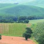 Tuscany vineyard — Stock Photo
