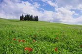 Tuscany forest — Stock Photo