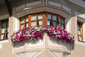 Front of the house with petunia - flower pots — Stock Photo