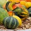 Ornamental pumkin — Stock Photo #33237335