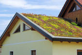 Green roof — Stock Photo