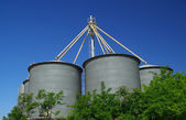 Silage - warehouse for the storage of bulk materials — Stock Photo