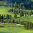 Cypress curve — Stockfoto #33571841