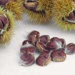 Sweet chestnut — Stock Photo