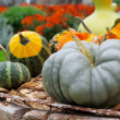 Ornamental pumkin — Stock Photo #35010931