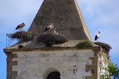 Storks on the roof of the building developed nests — Foto de Stock
