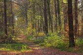 Hiking trail — Stock Photo