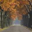 Avenue in fall — Stock Photo
