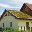 Stock Photo: Green roof