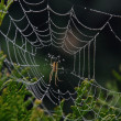 Stock Photo: Close-up cobweb