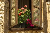 Flowerpot on the window — Stock Photo