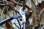Tree cutting — Stock Photo
