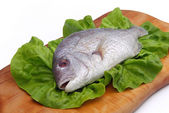 Gilt head bream — Stock Photo