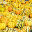 Ornamental pumkin — Stock Photo #36037689