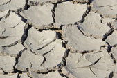 Dried out ground — Stock Photo
