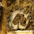 Insect hotel — Stock Photo