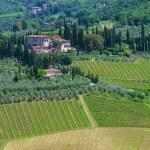 Tuscany vineyard — Stock Photo #36968165