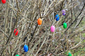 Shrub in easter time — Stock Photo
