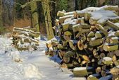 Stack of wood in winter — Stock Photo