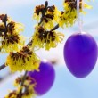 Stock Video: Hamamelis shrub in easter time