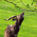 Antelope — Stock Photo #39998421