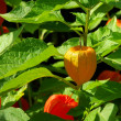 Stock Photo: Chinese lantern