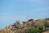 Garbage dump — Photo