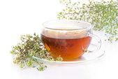 Tea yarrow — Stock Photo