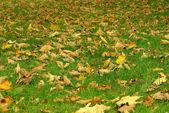 Fall foliage on meadow — Foto de Stock
